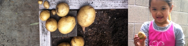 peas-header-potatoe2