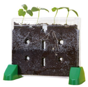 seed-growing-container
